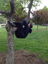 Day 360 Risk: Finally Climb A Tree — Attempt #3